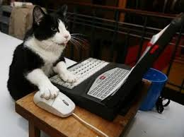 funny cat at computer