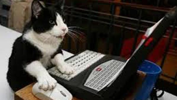 a cat using a computer.
